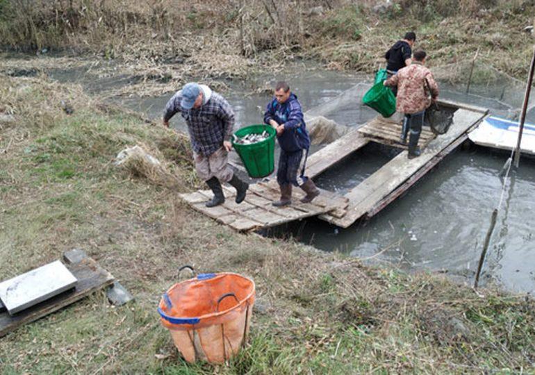 У Каховське водосховище випустили майже 31 тисячу мальків товстолобика