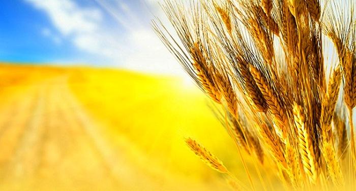 Чем могут похвастаться аграрии Запорожской области?