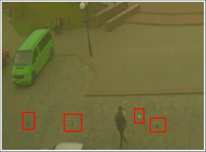 В Бердянске возле мэрии разбрасывали… мертвых голубей