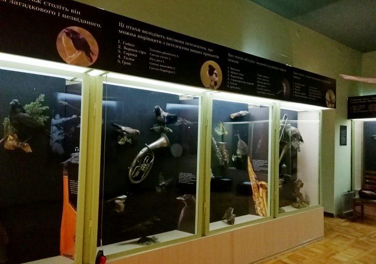 «Мелодія польоту»: у Запоріжжі триває виставка птахів і музичних інструментів