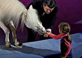 В Запорожском государственном цирке состоялась премьера волшебной программы «Новогодний карнавал» (фото, видео)