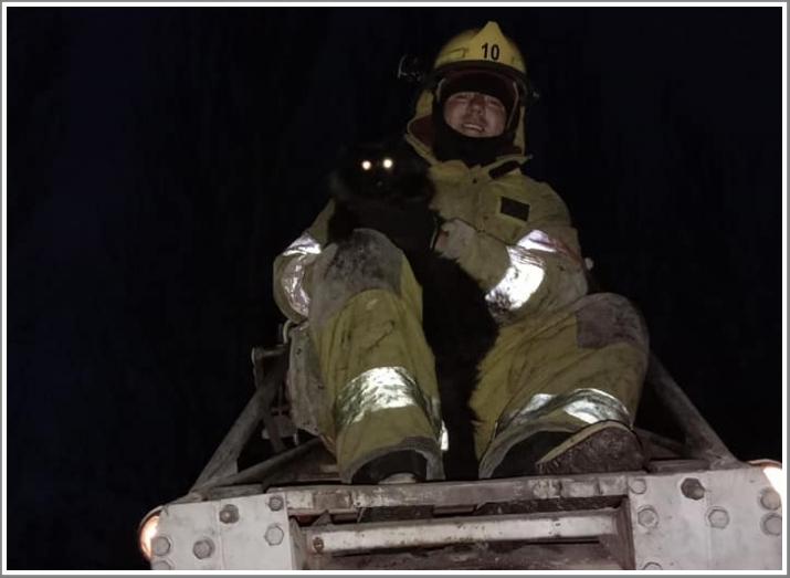 В Мелитополе к коту пришлось вызывать спасателей