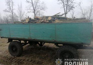 В Запорожском районе орудуют черные лесорубы
