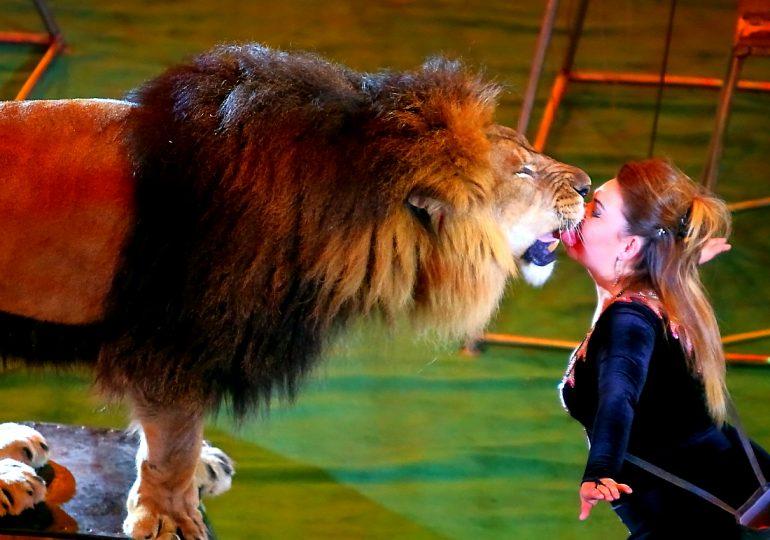 В запорожском цирке больше не будут выступать животные (фото, видео)