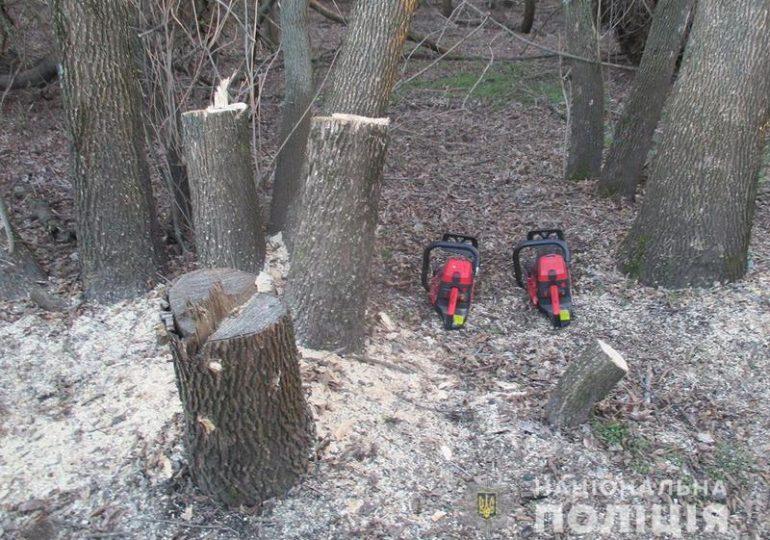 На Запоріжжі поліцейські викрили два факти незаконної порубки лісу