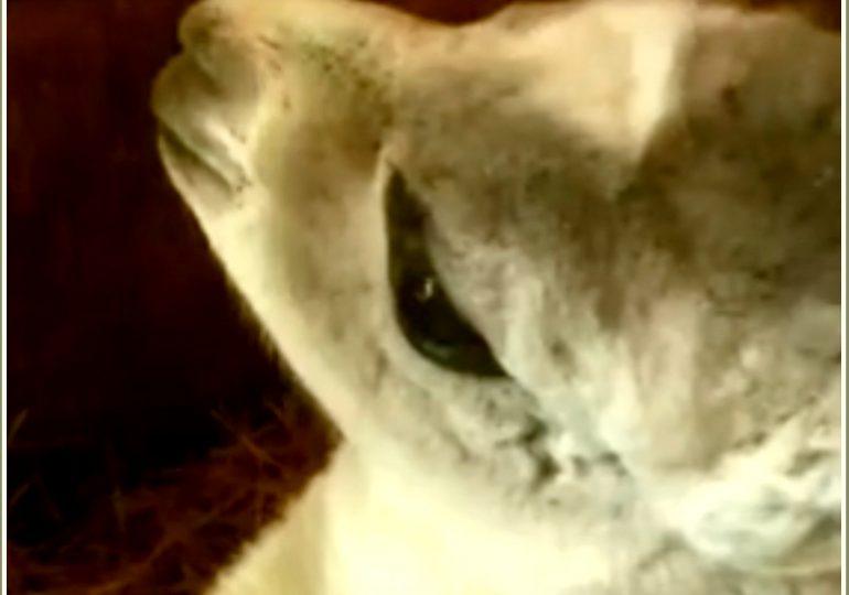 В Бердянском зоопарке «Сафари» родился детеныш ламы