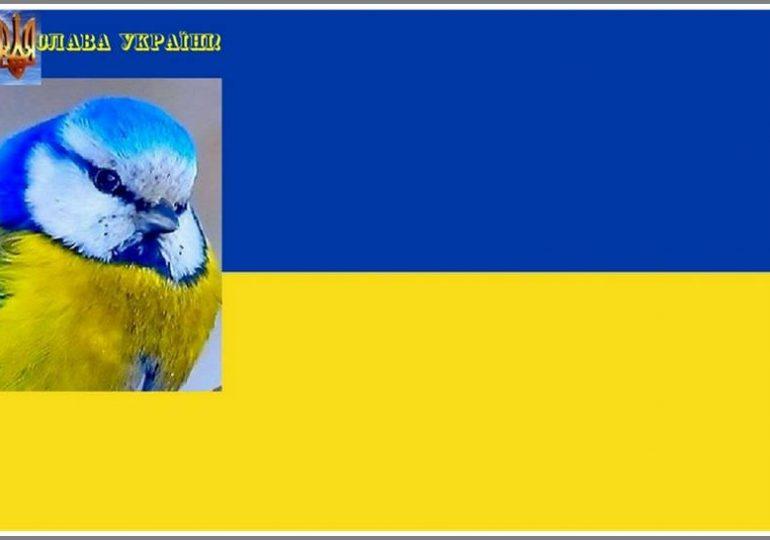 В Запорожье можно встретить... самую украинскую птицу