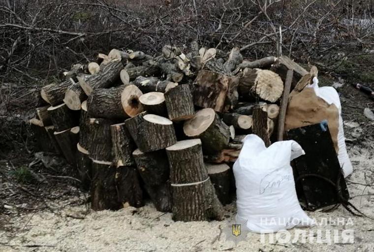 У Бердянську поліцейські виявили факт незаконної порубки лісу