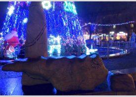 В Запорожье у главной новогодней ёлки - синяя ночь