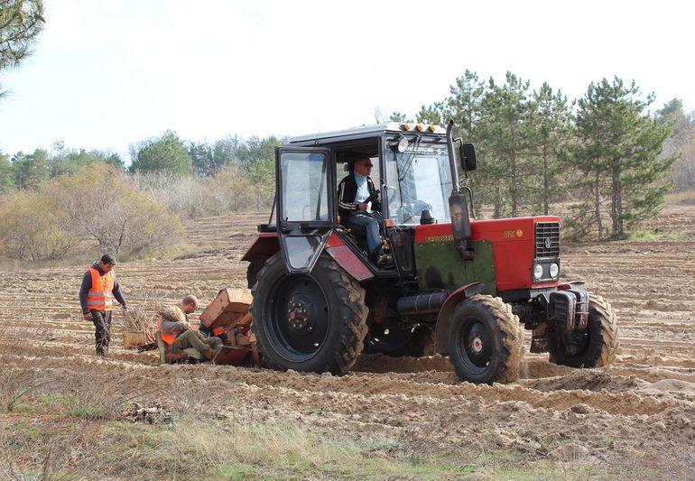 В Запорожской области лесов стало больше на 470 гектаров