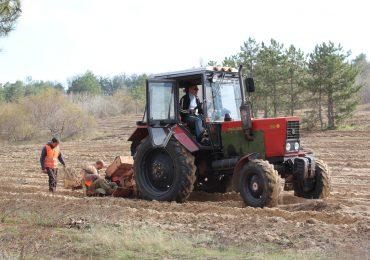 Минулого року на Запоріжжі висаджено більше 470 га лісів