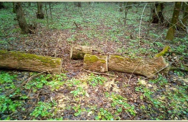 Под Запорожьем – возле Панского озера, идет лесоповал