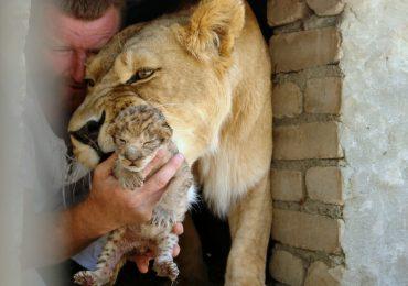 Васильевский зоопарк семьи Пылышенко (фото, видео)