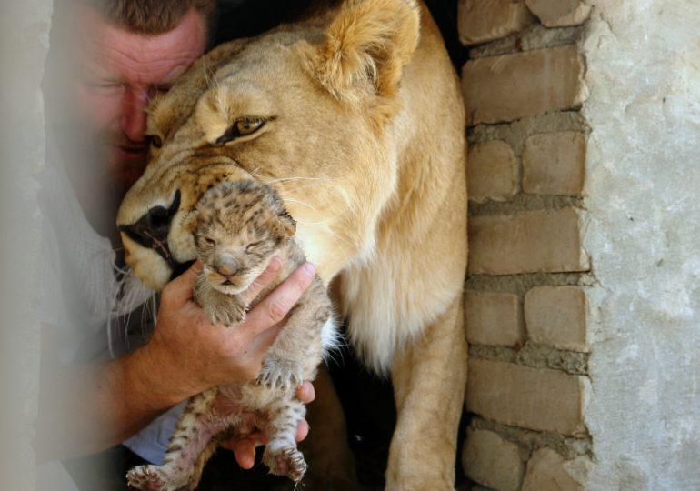 Васильевский центр реабилитации диких животных семьи Пылышенко (фото, видео)