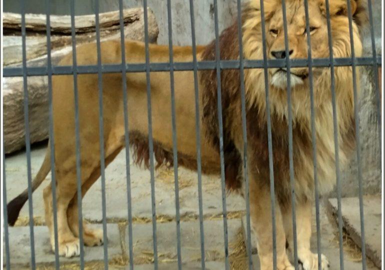 Где в Запорожской области водятся львы и тигры?