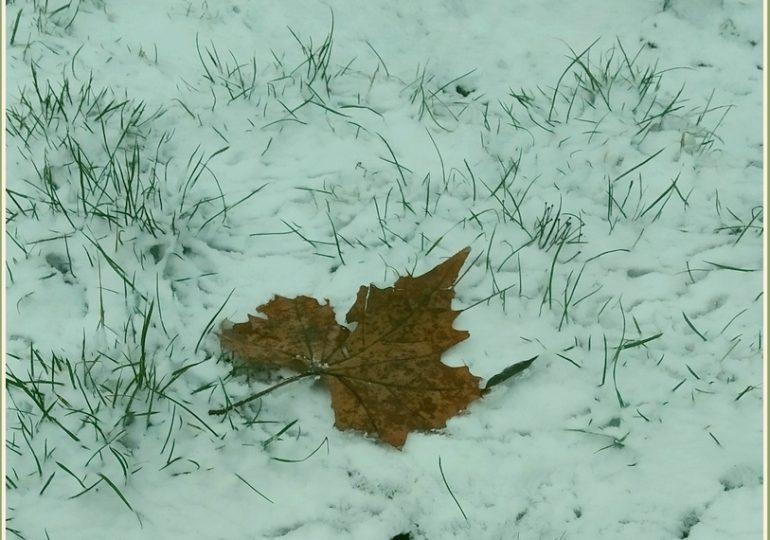 В Запорожье – листопад… после снегопада (фото)