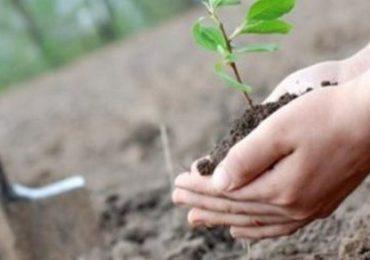 В Запорожье за сутки высадят 10 тысяч деревьев