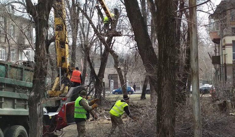 В Вознесеновском районе Запорожья кронировали около сотни деревьев