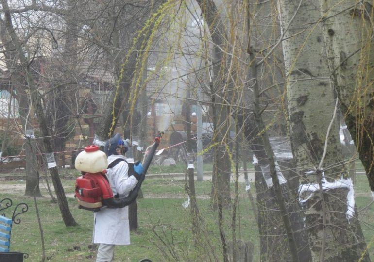 У Бердянську розпочали санітарну обробку дерев від червеця