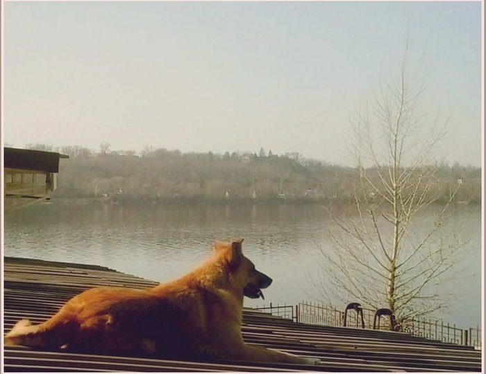 В Запорожье замечен очень сосредоточенный пёс (фото)
