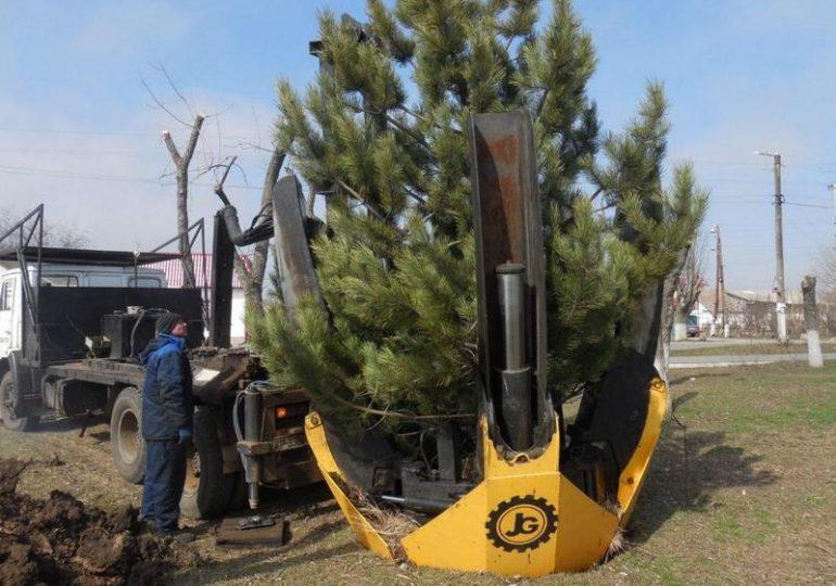 В Бердянске появится сосновый сквер