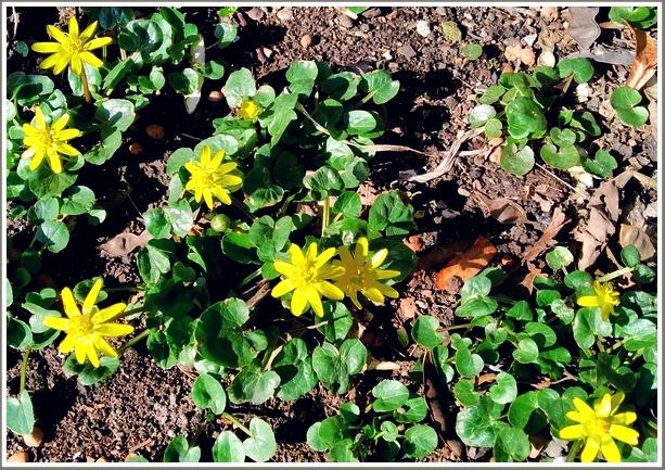 В Запорожье весна рассыпала по земле... солнце