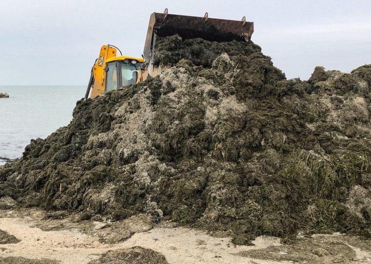 В Бердянске море выбросило на берег много зеленых водорослей