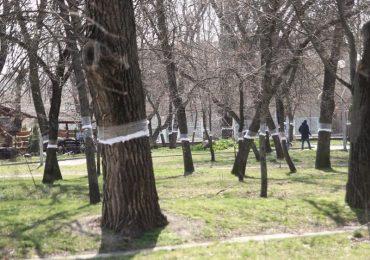 В Бердянске на деревьях устанавливают ловушки против вредителей