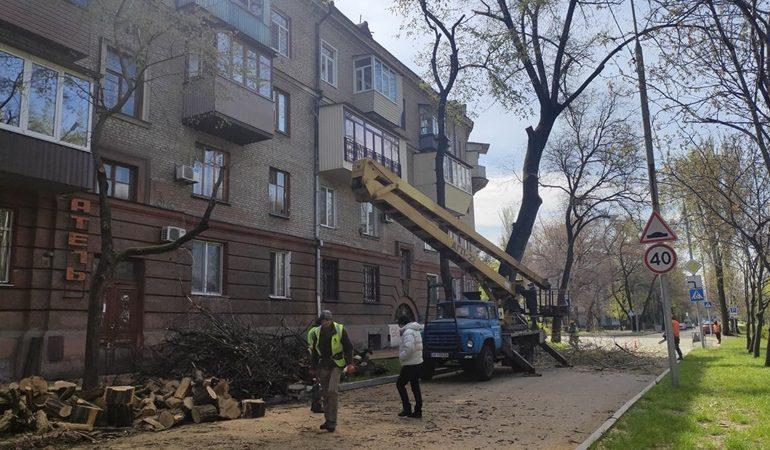 В Запорожье кронируют деревья