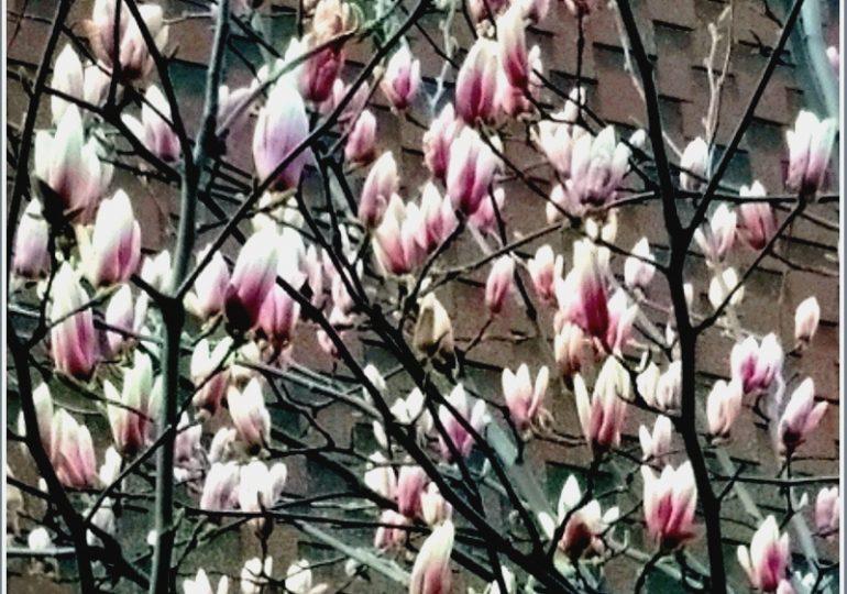 По Запорожью бродит цветущий апрель (фото)