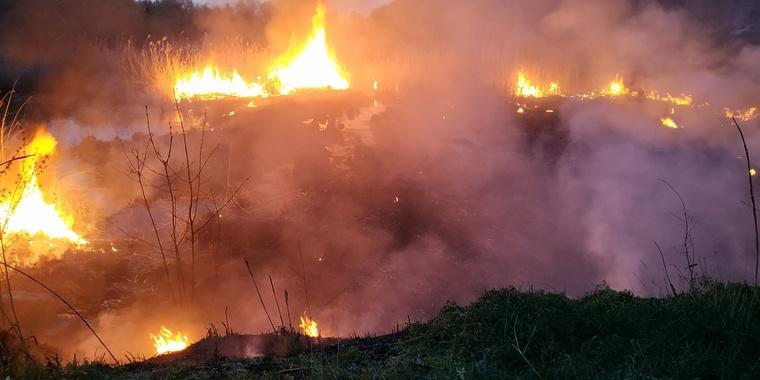 На території Запорізької області рятувальники ліквідували 9 пожеж в екосистемах