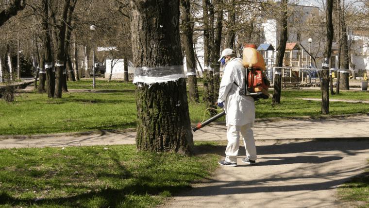 В Бердянске ведут активную борьбу с вредителями деревьев