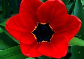 В Запорожье зацвел самый украинский цветок (фото)