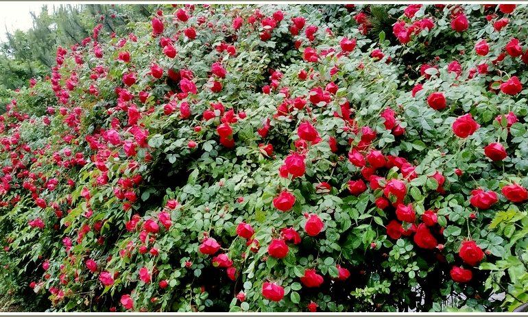 В Запорожье появилась розовая стена (фото)