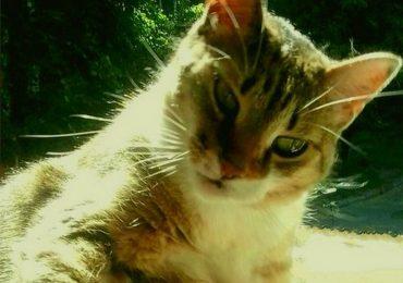 Как в Запорожье кошка обиделась (история из жизни)