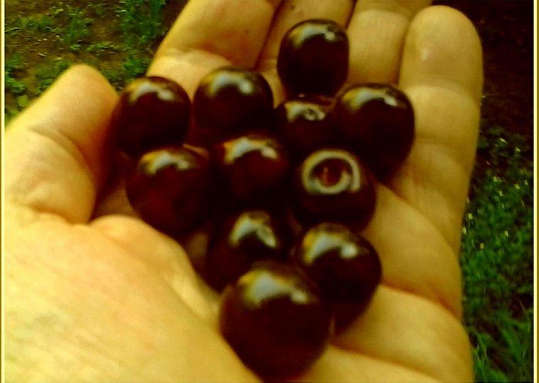 Почем в Запорожье вишня со вкусом детства?