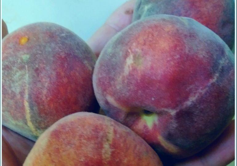 Почём в Запорожье персики?