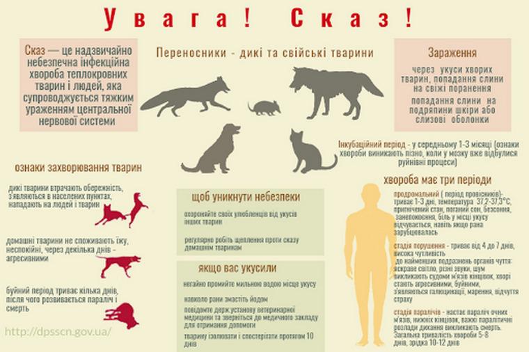 У Запорізькій області зареєстровано вісім випадків сказу тварин