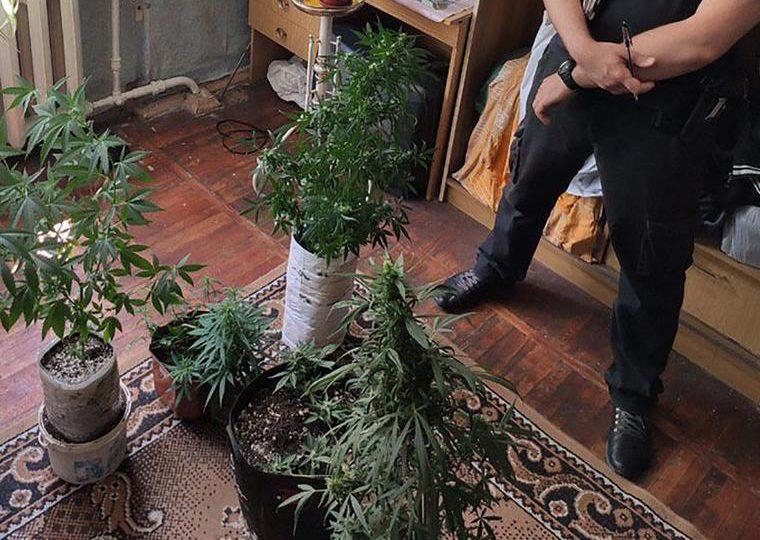 У Запоріжжі оперативники викрили чоловіка, який вирощував коноплю у квартирі