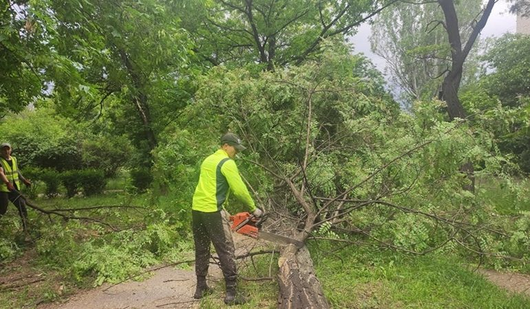 В Запорожье - лесоповал: удаляют аварийные деревья