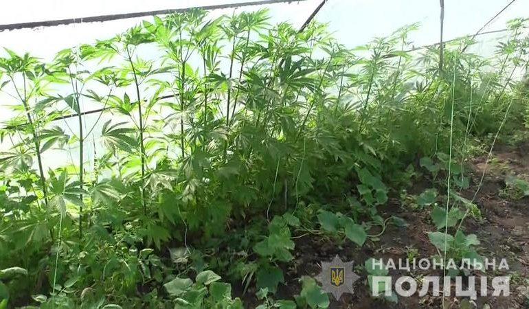 Правоохоронці виявили у жителя Оріхівського району посів нарковмісних рослин