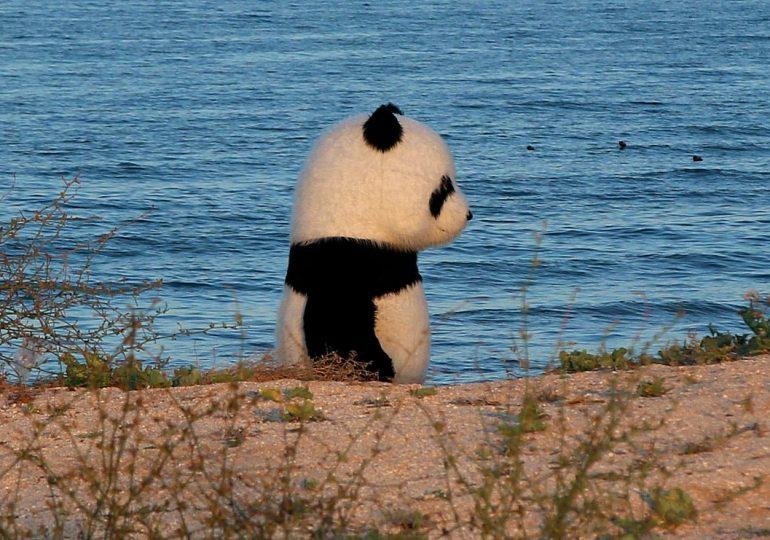 На берегу Азовского моря была замечена одинокая панда (фото, видео)