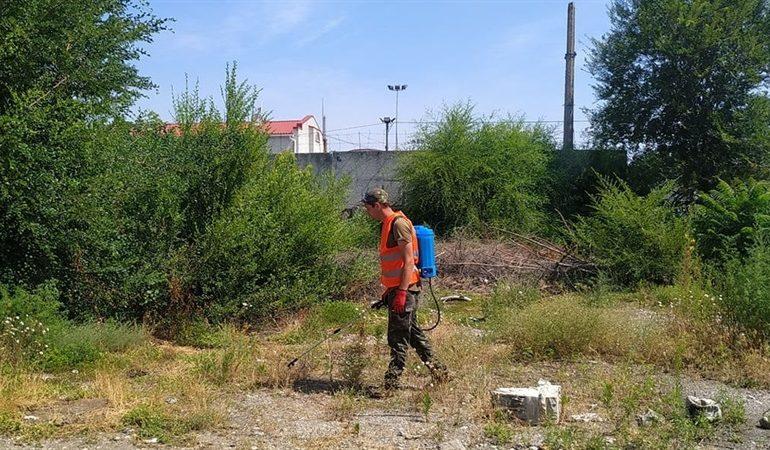 В Запорожье выполняют химическую обработку карантинных растений