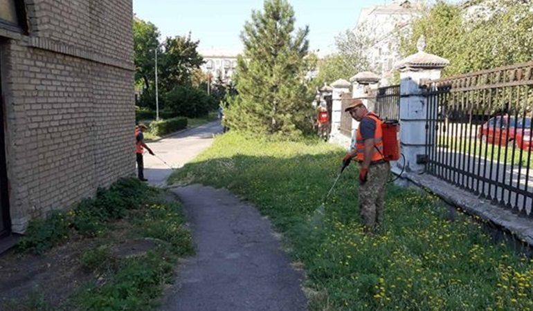 В Запорожье продолжается борьба с карантинными растениями
