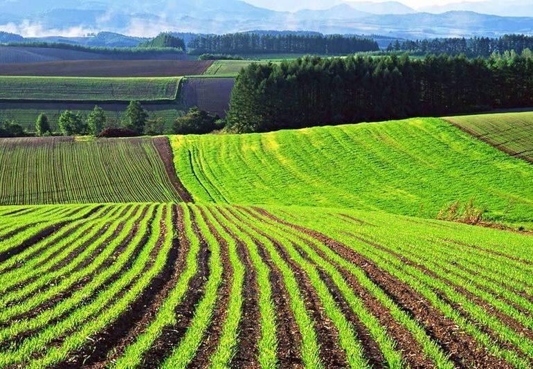 В Запорожской области владельцы земельных паев уже получили более 94 миллионов гривен