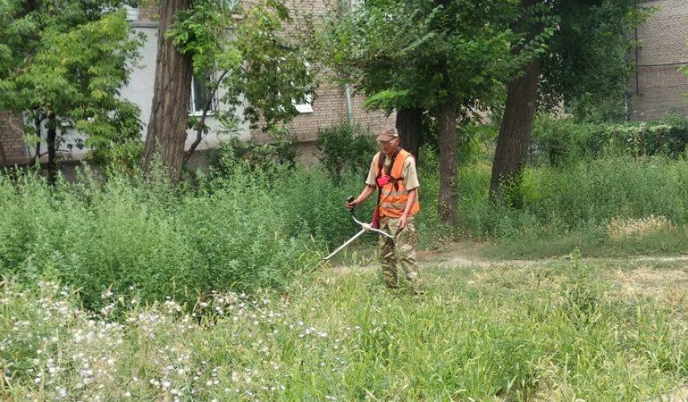 В Запорожье ведут борьбу с карантинными растениями