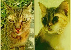 Кошкина радость по-запорожски