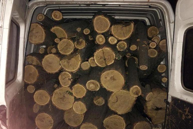 У Запорізькій області поліція встановила факт незаконної порубки дерев