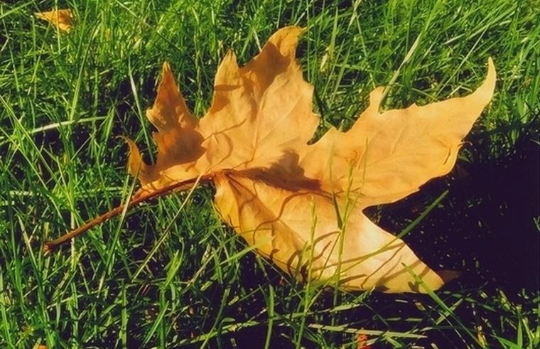 По Запорожью бродит рассеянная Осень (фото)