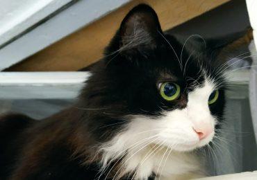 Помогите найти любящую семью котику!